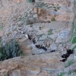 Bau taghia (2)